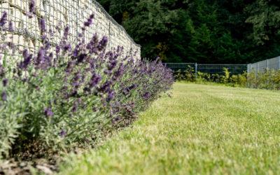 Těrlicko, minimalistická zahrada